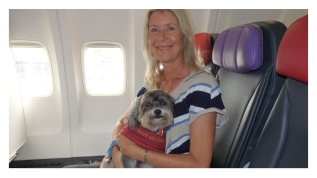 inflight therapy dog